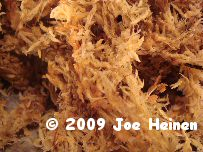 New Zealand Sphagnum